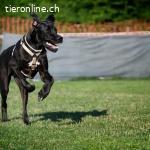 Come & Wait – Hundeschule