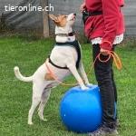 Fun & Play – Hundeschule