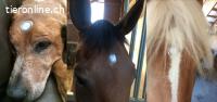 Liefewave für Mensch und Tier Akupunktur ohne Nadeln