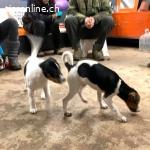 Young & Wild – Welpen (Hundeschule)